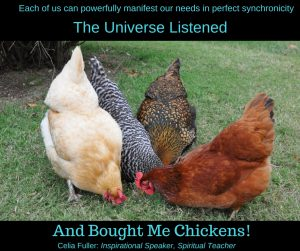 The Universe Listened and Bought me Chickens!